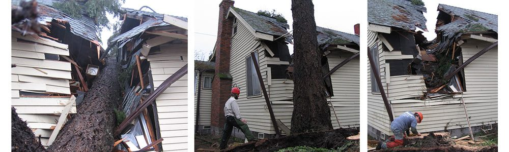 House damage by falling tree